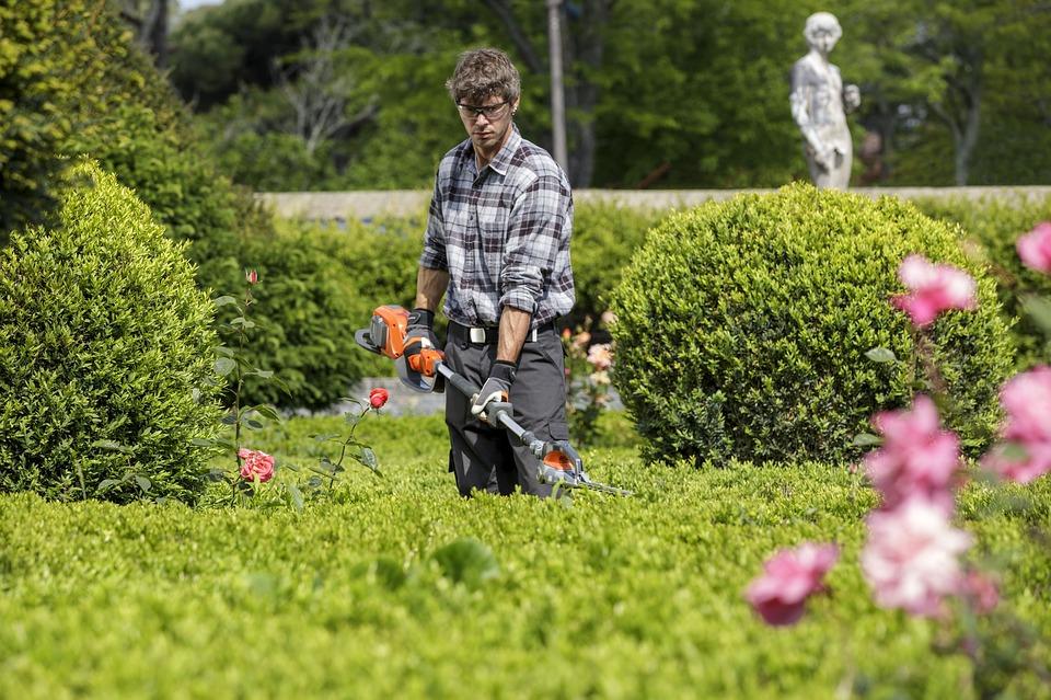 Tailler les haies de son jardin : 7 conseils pour les ...
