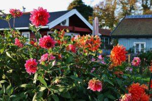 Fleurs, Jardin, Jardins Colorés, L'Automne