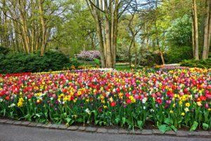 Jardin, Jardin De Fleurs, Lit De Fleurs, Tulipe