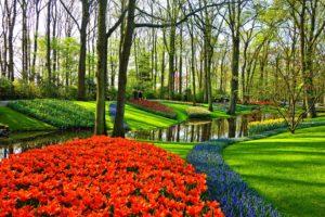 Jardin, Jardin De Fleurs, Fleurs, Lit De Fleurs
