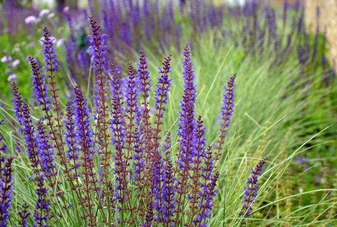 plantes-médicinales-à-cultiver-dans-le-jardin