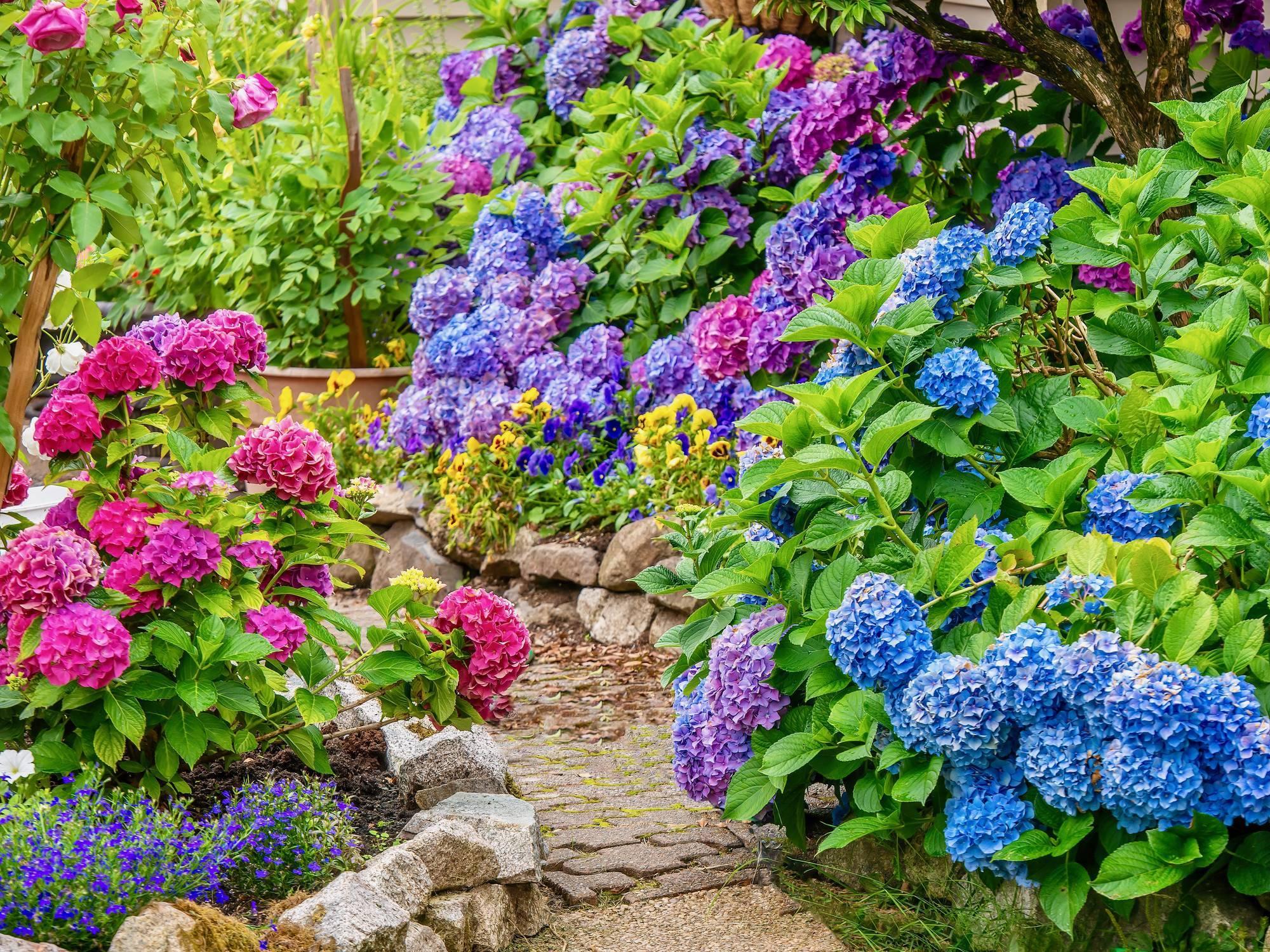 bordure de jardin