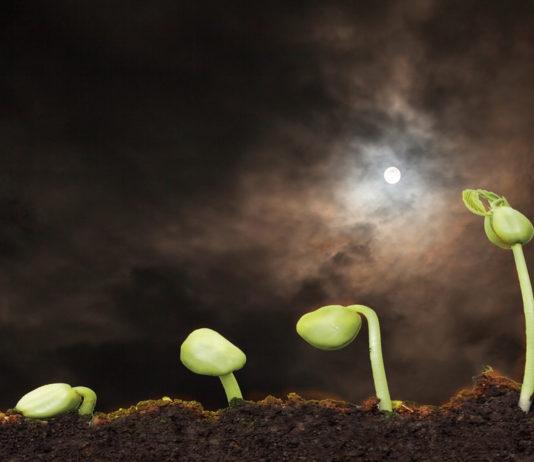 jardiner avec lune