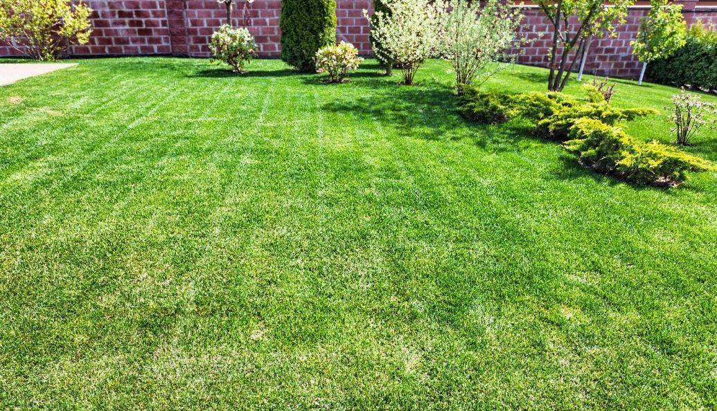 pelouse bien tondue