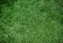 pelouse parfaite